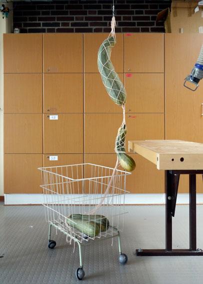 Zucchiniaufhängung, Foto, Größe variabel