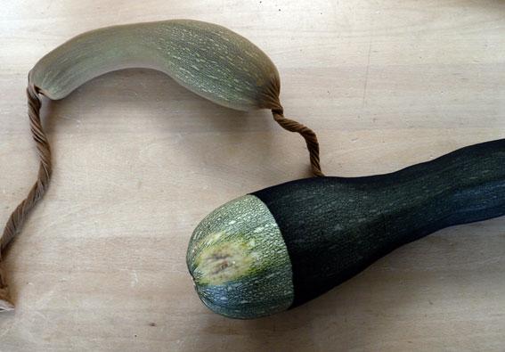 Zucchiniverbindung, Foto, Größe variabel